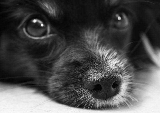 desir rencontre chien adulte chiot